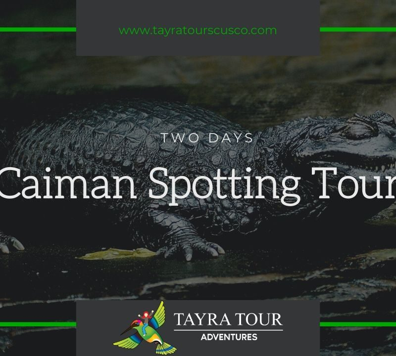 Caiman Spotting Tour